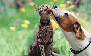Das Beste für Sie und Ihr Haustier!