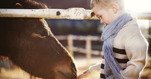 So punkten Sie auch in der Tierhalterhaftpflichtversicherung bei Ihren Kunden