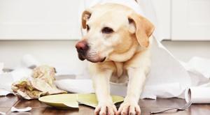 Neue Sublimits in der max-THV Premium für Hunde
