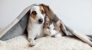 Jetzt auch Tierkrankenversicherungen im VersicherungsLotse vergleichen
