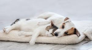 maxpool stockt Angebot im Bereich Tierkrankenversicherung auf