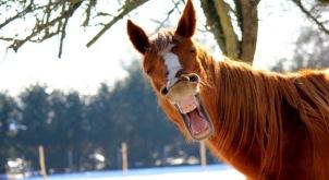 Pferdehalterhaftpflichtversicherung richtig abschließen
