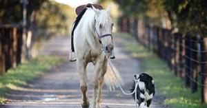 Tierhalter-Haftpflichtversicherung: Leistungsstark wie noch nie!