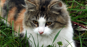 Neu bei maxpool: Tierkrankenversicherung